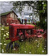 Reds In The Pasture Acrylic Print
