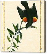 Redwing Blackbird Vertical Acrylic Print