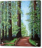 Redwood Forest Path Acrylic Print