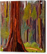 Redwood Giant Acrylic Print