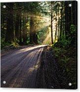 Redwood Magic Acrylic Print