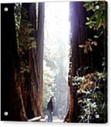 Redwood Path Acrylic Print