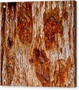 Redwood Spirit Acrylic Print
