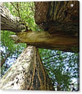 Redwoods Forest Art Prints Canvas Framed Redwood Trees Acrylic Print