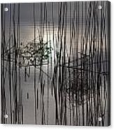 Reed Reflection 3 Acrylic Print
