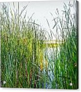 Reeds And River Acrylic Print