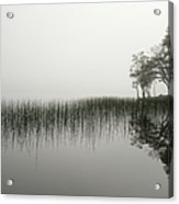 Reeds And Shore In The Mist Acrylic Print