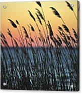 Reeds At Sunset Island Beach State Park Nj Acrylic Print