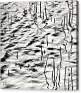 Reeds In Ripples Acrylic Print