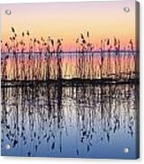 Reeds Reflected In Water At Dusk Ile Acrylic Print