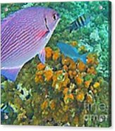 Reef Life Acrylic Print by John Malone