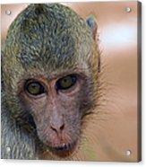 Reese's Monkey Portrait Acrylic Print
