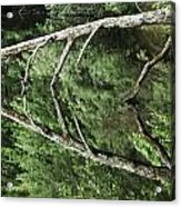 Reflected Branch Acrylic Print