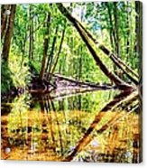 Reflected Forests Acrylic Print