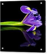 Reflected Iris Acrylic Print