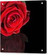 Reflected Red Rose Acrylic Print
