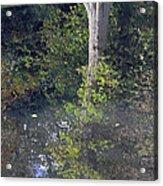 Reflected Tree Acrylic Print