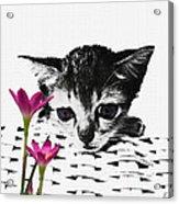 Reflecting Kitten Acrylic Print