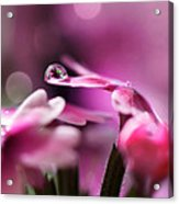 Reflecting On Pink Acrylic Print