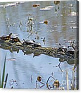 Reflecting On The Nice Spring Weather Acrylic Print