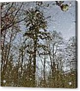 Forest Reflection Acrylic Print
