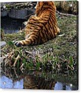 Reflecting Stripes Acrylic Print