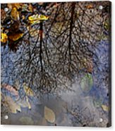 Reflection In A Puddle Acrylic Print