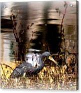 Reflection Of A Heron Acrylic Print