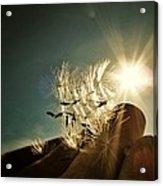 Reflection Of The Sun Acrylic Print