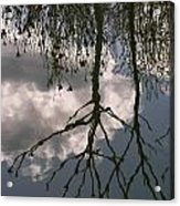 Reflection On Trees Acrylic Print