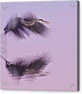 Reflections In Flight Acrylic Print