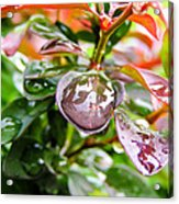 Reflections In Raindrops Acrylic Print
