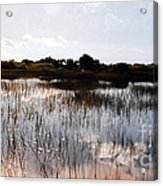 Reflections In The Everglades  Acrylic Print