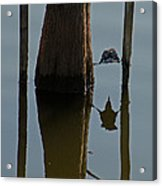 Reflections Acrylic Print by Julie Cameron