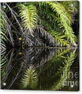 Reflections Marimbus River Brazil 2 Acrylic Print