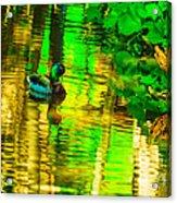 Reflections Of A Mallard Duck Acrylic Print