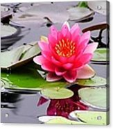 Reflections Of A Pink Waterlily  Acrylic Print