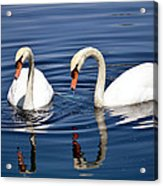 Reflections Of Elegance Acrylic Print