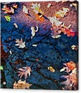 Seasons Of Refletion Acrylic Print