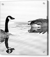 Reflections Of Geese Acrylic Print