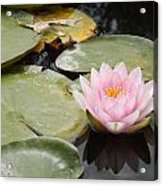 Reflections Of Lily Acrylic Print