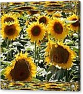 Reflections Of Sunflowers Acrylic Print