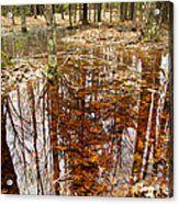 Reflections On A Forest Floor Acrylic Print