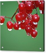 Reflective Red Berries  Acrylic Print