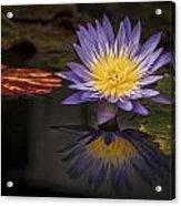 Reflective Water Lily Still Life Acrylic Print