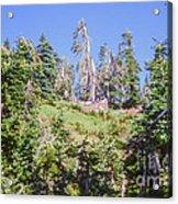 Reforestation Acrylic Print