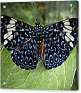 Regal Blue Butterfly Acrylic Print