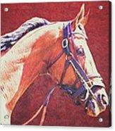 Regal Racehorse Acrylic Print