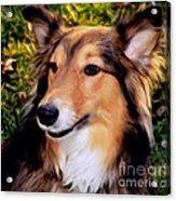 Regal Shelter Dog Acrylic Print