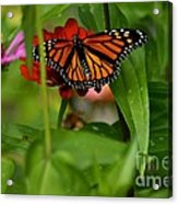 Regular Visitor Acrylic Print